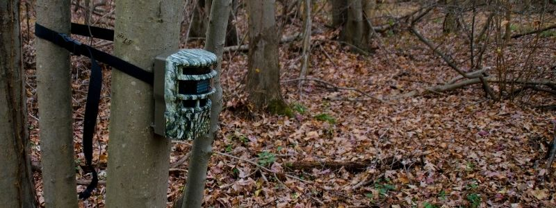 5 Best Hunting Trail Cameras